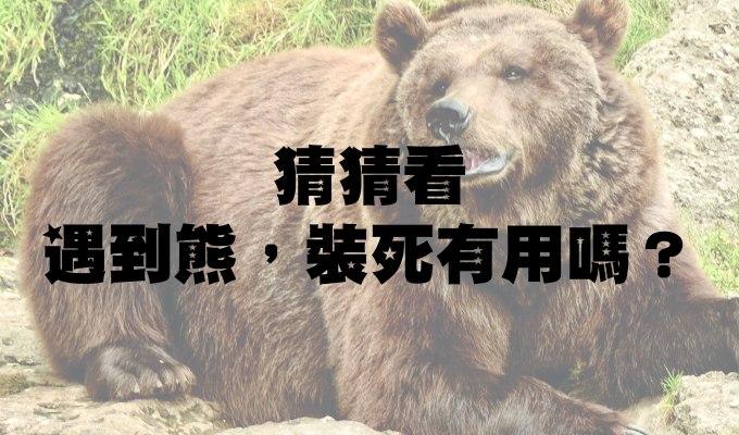 科學問答:遇到熊裝死有用嗎?